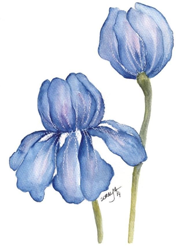 ilustração soraya pamplona flor aquarela