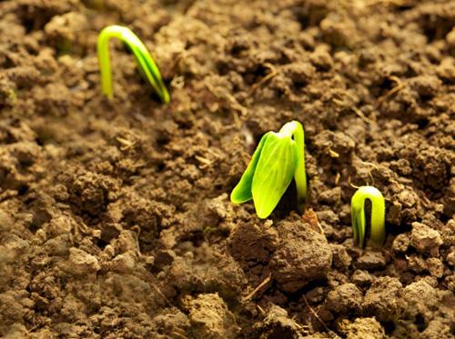 sementinha sustentavel ecodesign soraya pamplona