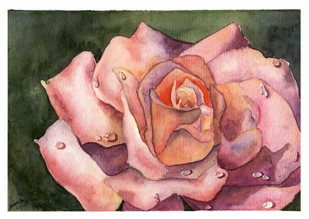 rosa-no-orvalho-aquarela-soraya-pamplona-rosas