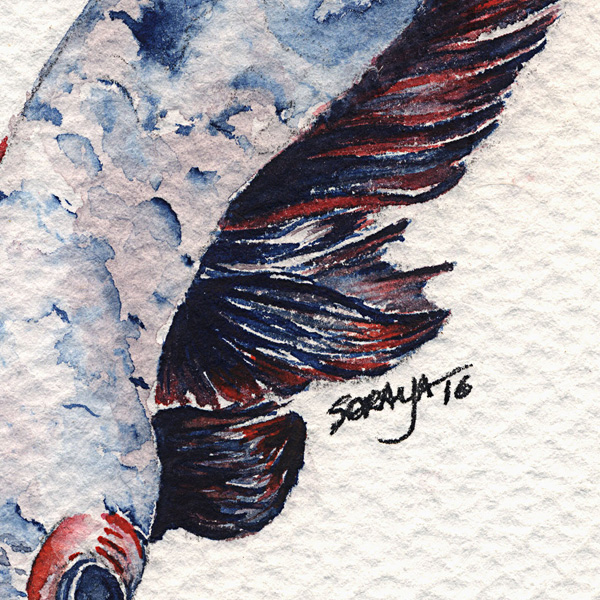 soraya-pamplona-aquarela-peixe-betta-600-01