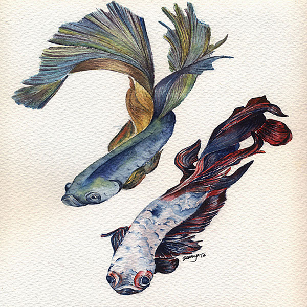 soraya-pamplona-aquarela-peixe-betta-600-04